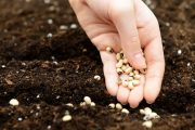 Five myths of seed investing...