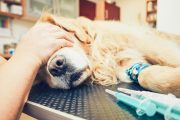 Why Do We Give Our Pets Death With Dignity but Not Ourselves?...