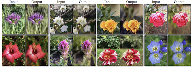 Example of Photograph Enhancement Improving the Depth of Field on Photos of Flowers