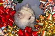 "How a Deranged ""Cat Wreath"" Brought Our Neighborhood Facebook Pag..."