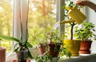Plants, Headphones, and Olfactory Privacy: <em>The Great In...