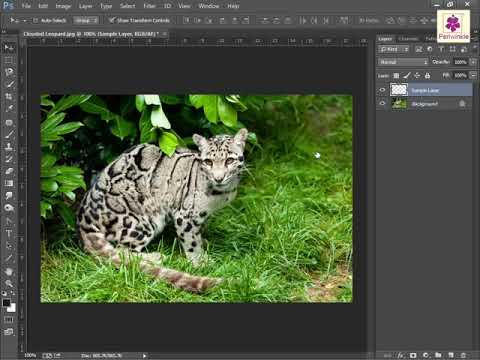 Creating A New Layer | Photoshop | Computer Training | Periwinkle...